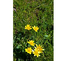 buttercups in a lush green garden lawn Photographic Print