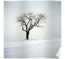Old Tree in the Snow Poster