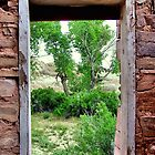 Framed Cottonwoods by debidabble