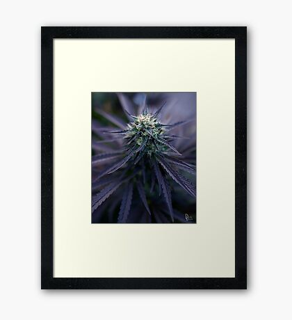 Mary Chino Framed Print