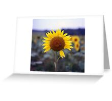 Sunflower's Last Days Greeting Card