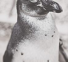 Portrait of a Penguin by Indea Vanmerllin
