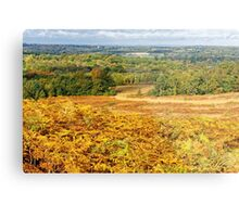 Ashdown Forest in Autumn Metal Print
