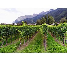 Vineyard in Switzerland Photographic Print