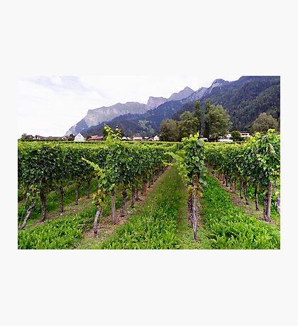 Vineyard in Switzerland Photographic Print
