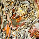 Bark by Walter Quirtmair