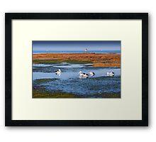 Pelicans Feeding - Rickett's Point Framed Print