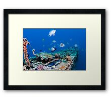 fish and scuba diver at a coral reef, Photographed at 10m, Red Sea, Eilat, Israel  Framed Print