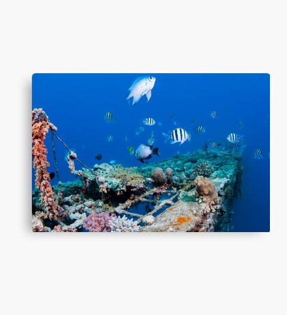 fish and scuba diver at a coral reef, Photographed at 10m, Red Sea, Eilat, Israel  Canvas Print