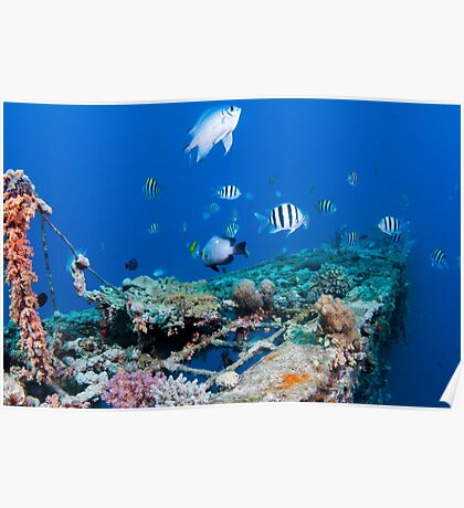 fish and scuba diver at a coral reef, Photographed at 10m, Red Sea, Eilat, Israel  Poster