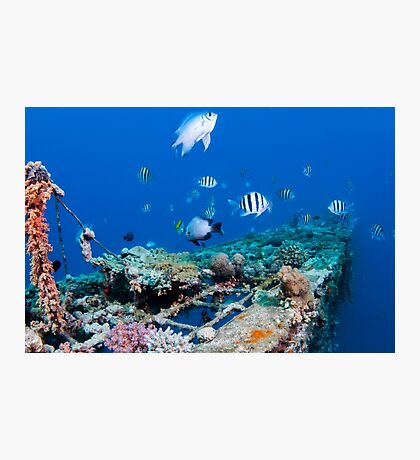 fish and scuba diver at a coral reef, Photographed at 10m, Red Sea, Eilat, Israel  Photographic Print