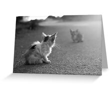 Emotional Cat Ambient Romantic Sad Black And White Photography Greeting Card