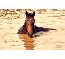 """Horses with Attitude, no.1, 'Come Out Here and Say That'""... prints and products Photographic Print"