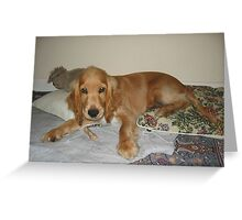 ECS red puppy Greeting Card