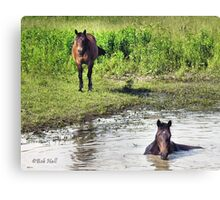 """LOOKING AT ME, LOOKING AT YOU""... prints and products Canvas Print"