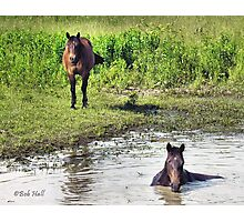"""""""LOOKING AT ME, LOOKING AT YOU""""... prints and products Photographic Print"""