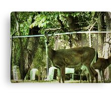 """Oh, Deer!""...prints and products Canvas Print"