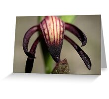 Pyrorchis Nigricans  Greeting Card
