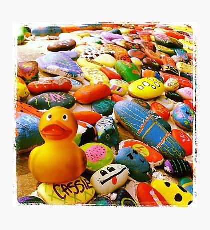 Felix - Stones Photographic Print