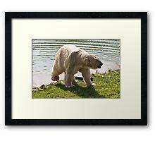 Cool Bear Framed Print