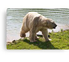 Cool Bear Canvas Print