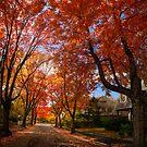 Red Autumn by LudaNayvelt