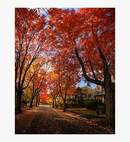 Red Autumn Photographic Print