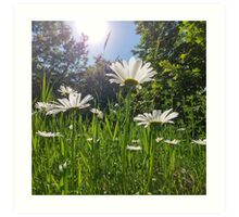LG G5 Sun Daisies  Art Print