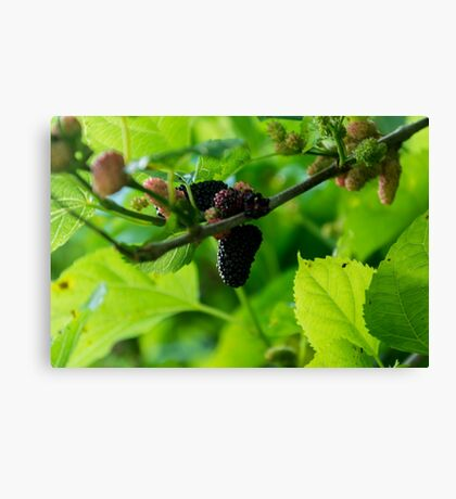Mulberry Fruit Canvas Print