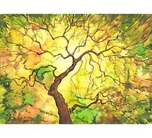 Watercolor autumn tree. Photographic Print