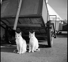 2 cats • essaouira, morocco • 2014 by lemsgarage