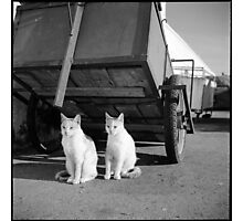 2 cats • essaouira, morocco • 2014 Photographic Print