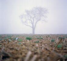 Tree in the Fog by Daniel Regner