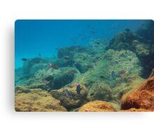 Underwater Dreamworld Canvas Print