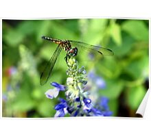 Dragonfly on Sage Poster