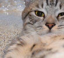 Cat makes selfie lying on the sand Sticker