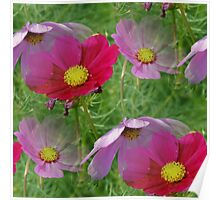 Cosmos Flowers Nature Pattern Poster