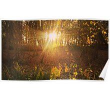 LG G5 Autumn Sunlight Poster
