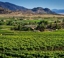 British Columbia Wine Country by Leanne Stewart