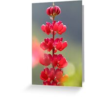 Lupin rouge Greeting Card