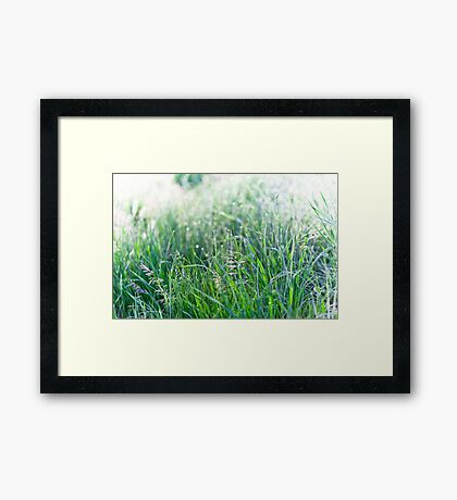 Green Grass with Raindrops Framed Print