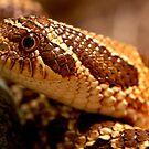 Hognosed Snake Up Close by imagetj