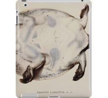 Tortoises terrapins and turtles drawn from life by James de Carle Sowerby and Edward Lear 053 iPad Case/Skin