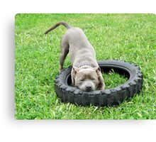 Staffordshire Bull Terrier, One Chomp Or Two. Canvas Print