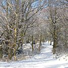 Snow Path by KMorral