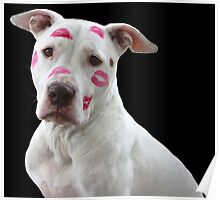 APBT with kisses Poster