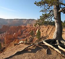 Bryce with the tree on right by loiteke