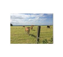 Cows Grazing Gallery Board