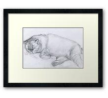 Sketch of Marmalade Framed Print