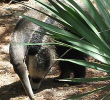 Anteaters Are Cool by Katy Wuerker